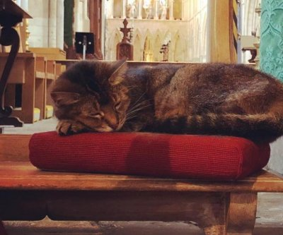 London cathedral live streams memorial for beloved stray cat