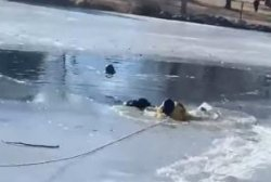 Stranded dog rescued from icy pond in Colorado