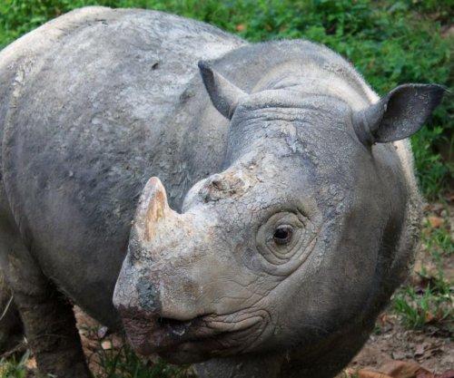 Sumatran rhino no longer found in Malaysia