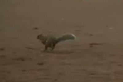 Minor League Baseball pitchers succesfully shoo squirrel off field during game