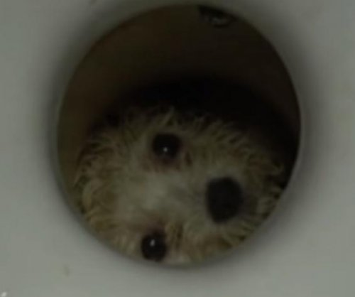 Firefighters rescue dog trapped inside toilet