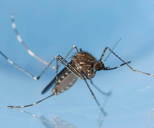 Study: Salt-based mosquito-control products don't work