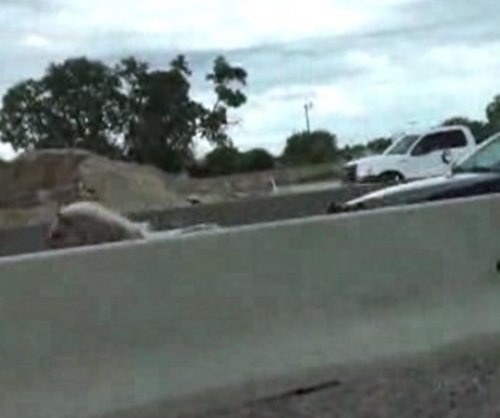 Fort Worth police chase escaped pony on interstate