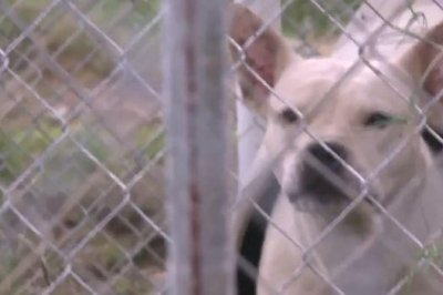 Arkansas animal shelter intruders force dogs to fight in 'bloodbath'