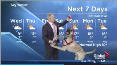 Watch: TV weatherman struggles with playful dog