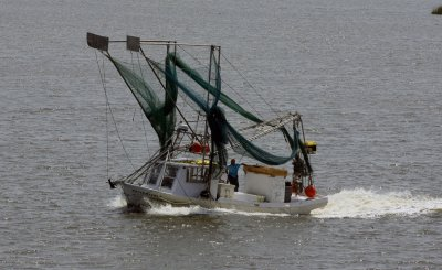 Fish lesions linked to 2010 Gulf oil spill