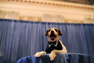 Uggie, the scene-stealing canine star of 'The Artist,' dead at 13