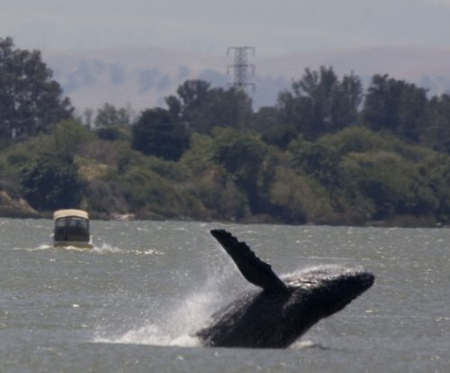 Conservationists take lessons from historic collapse of whale populations