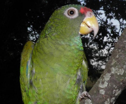 Ornithologists identify new parrot species in Mexico