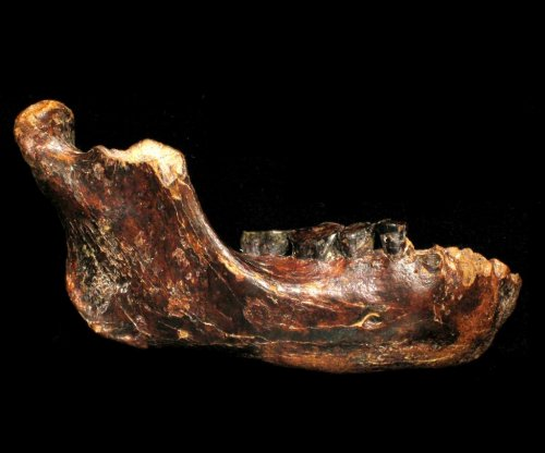 Jawbone found by fisherman may belong to unclassified human