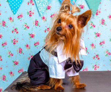 Ex-government worker allegedly used county credit card to buy a tuxedo for her dog