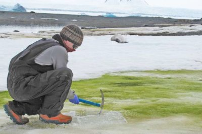Climate change, algae to turn Antarctica's coast green