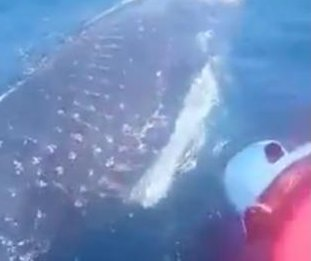 Fishermen free tangled whale off the coast of Peru