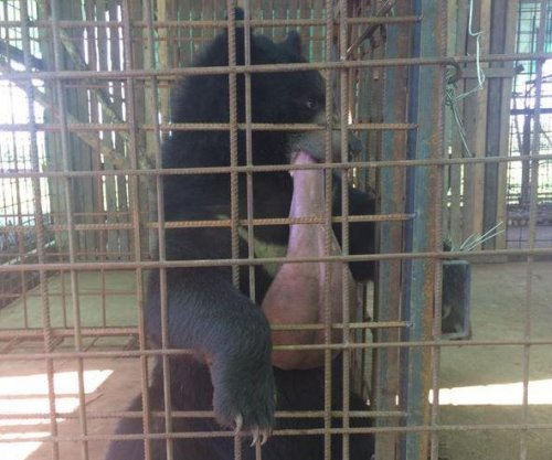 Myanmar bear with giant tongue saved by Scottish veterinarians