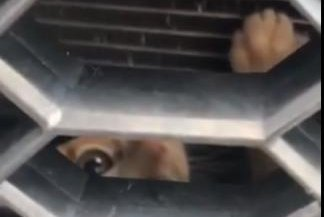 Kitten stows away behind grill of Louisiana woman's car
