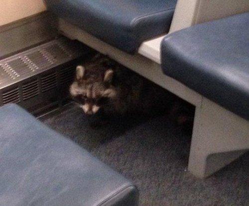 Raccoon hitches ride on Toronto train