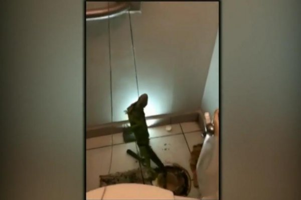 Watch Toilet Clog Turns Out To Be Iguana Related Upi Com