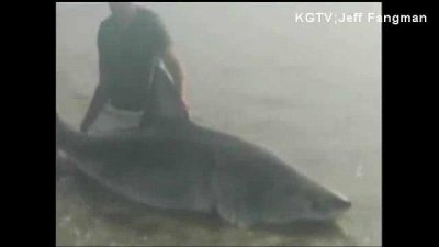 Marine catches and releases great white shark in California