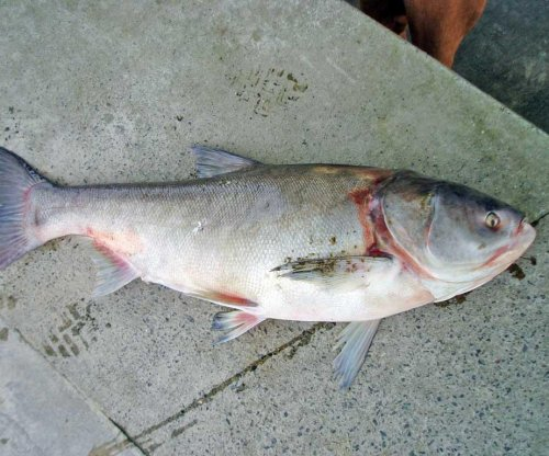 Bill to protect Great Lakes from Asian carp introduced in House