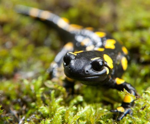 Amphibians don't lose memories during hibernation