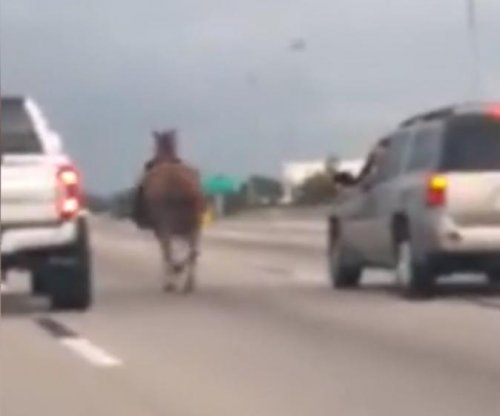 Horse captured while running loose on Houston highway