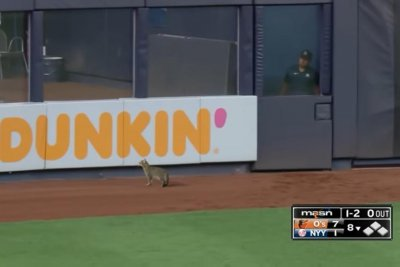 Cat runs onto the field during Yankees-Orioles game in New York
