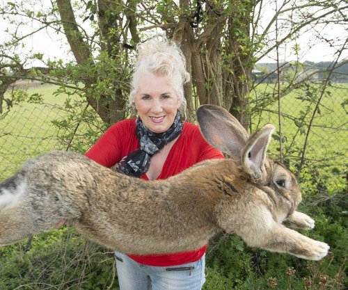 Giant rabbit on track to become world's largest dies on United flight