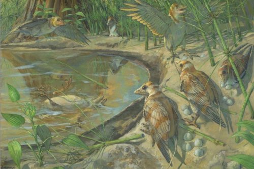 Cretaceous fossil suggests ancient bird died from 'egg-binding'