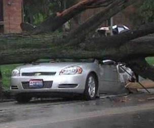 Large tree falls atop moving car, killing woman within