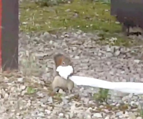 Mischievous squirrel steals campers' toilet paper supply
