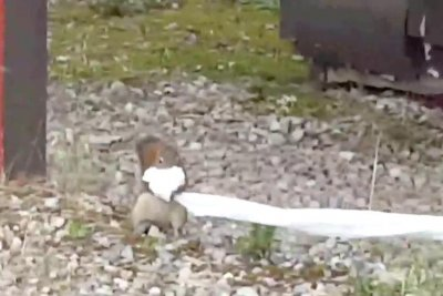 Mischievous squirrel steals campers' toilet paper supply