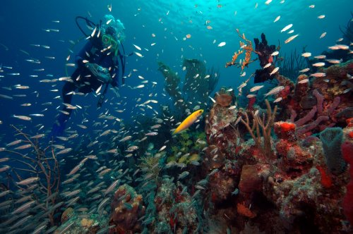 Reef fish become less aggressive after coral bleaching