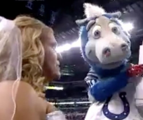 Couple gets married at Indianapolis Colts game, officiated by mascot