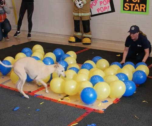 Toby the whippet sets new dog balloon-popping world record