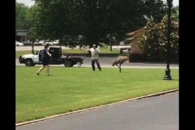 Mystery emu runs wild in Alabama, blocks highway traffic