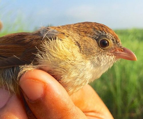 Bird thought to be extinct found in Myanmar