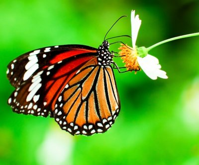 USFWS to create pollinator corridor for butterflies, bees