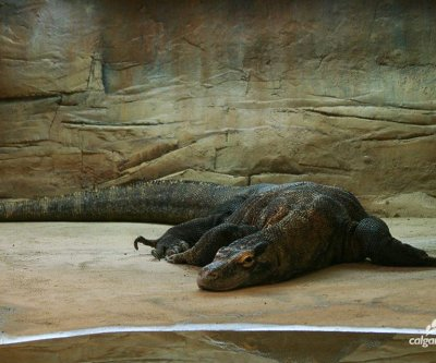 World's oldest captive Komodo dragon dies at 30