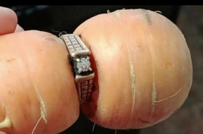 Missing engagement ring found on garden carrot 13 years later