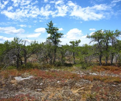 Study: Fire suppression has killed Wisconsin's pine barrens