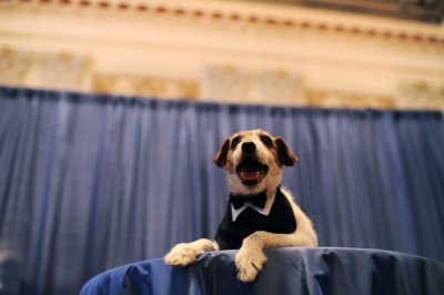 Uggie, star of 'The Artist,' named spokesdog for Humane Society campaign