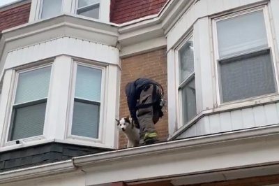 Firefighters rescue dog stranded on Pennsylvania roof