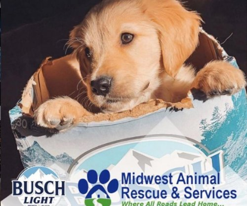 Busch offering three months of free beer for dog adoptions