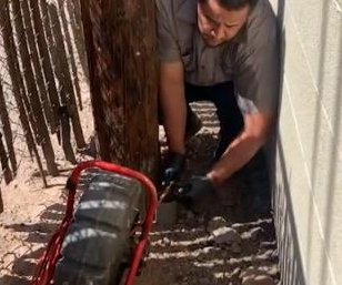 Kitten rescued from pipe under Phoenix cellphone tower