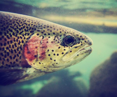 Fish toxin could be effective cancer treatment