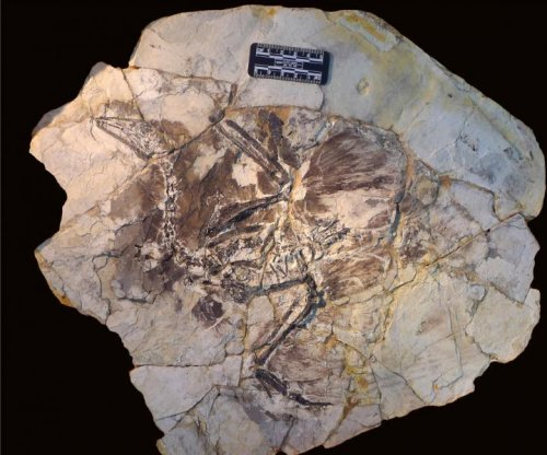 Study discovers why fossilized hairs are so rare to find