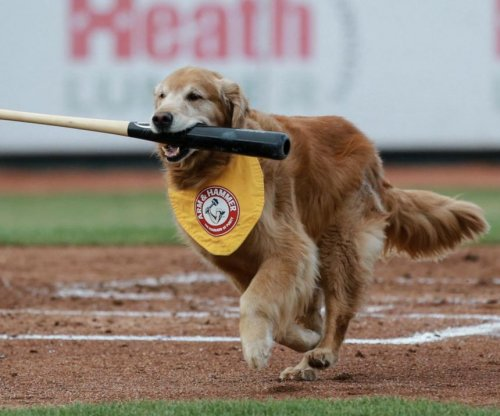 Bat Dog: Trenton Thunder's 'Derby' dies after cancer battle