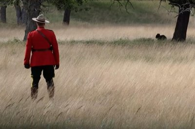 Mountie in red serge uniform chases bear out of a national park