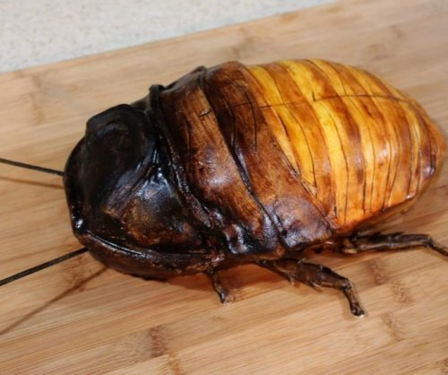 Artistic baker shares process behind Madagascar hissing cockroach cake