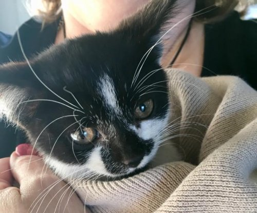 Kitten found inside engine of Florida woman's SUV
